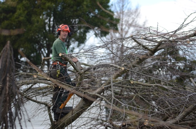 About ABM Tree Services